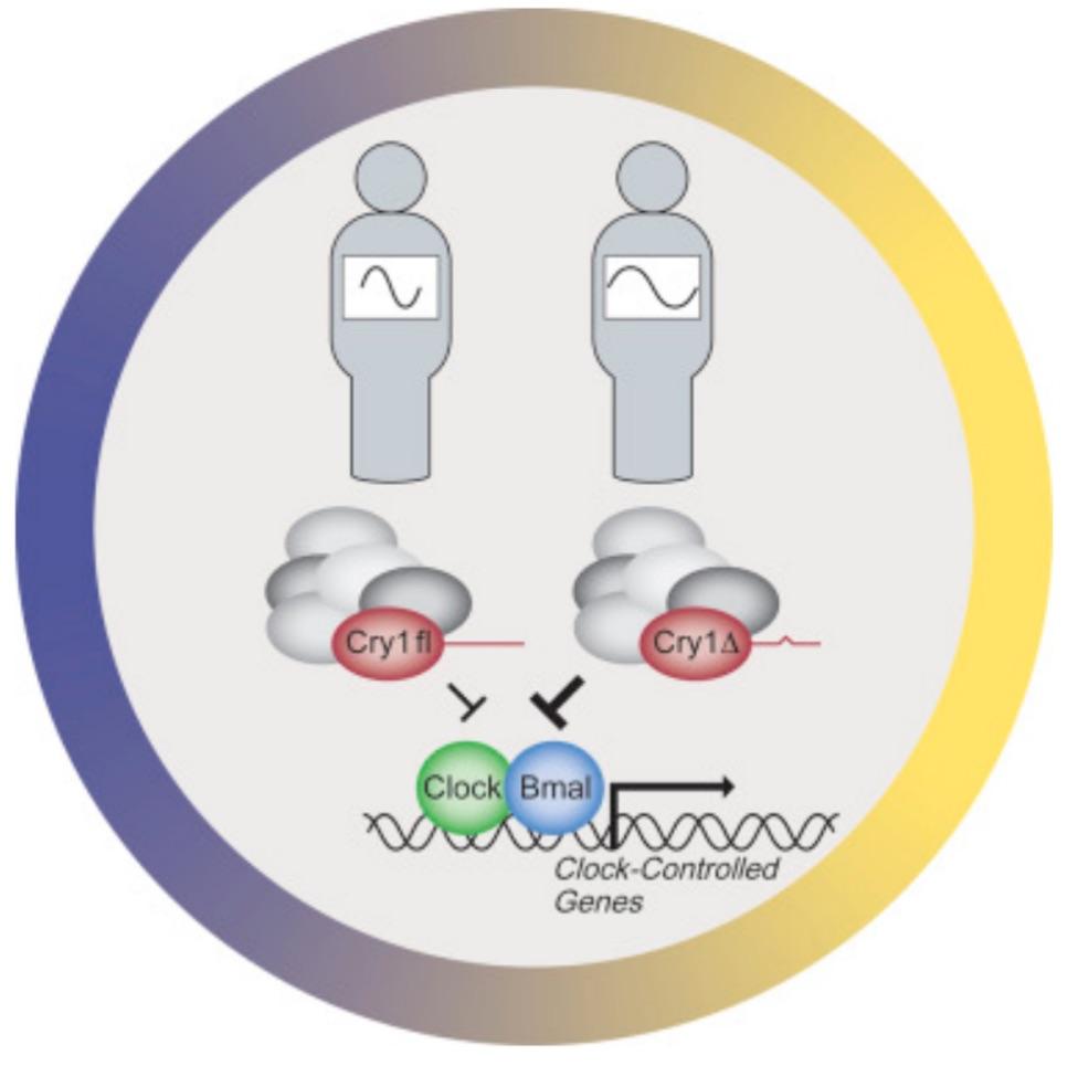 Un gene causa una particolare forma di insonnia